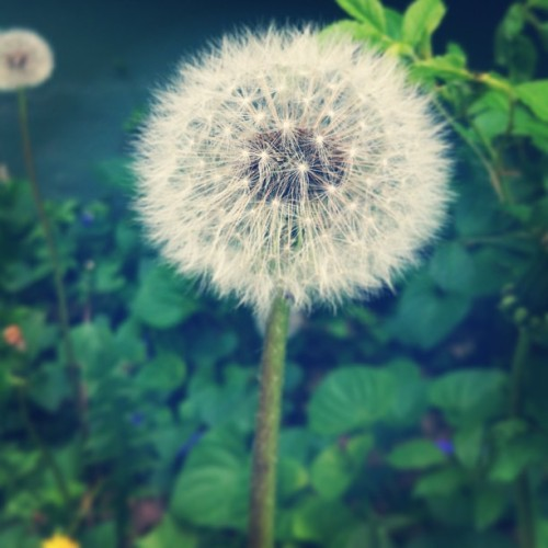 passthebonggg:  Make a wish  :)
