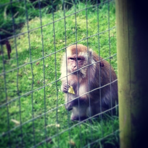 MONKEY!!!! #monkey #zoo #wildlife #