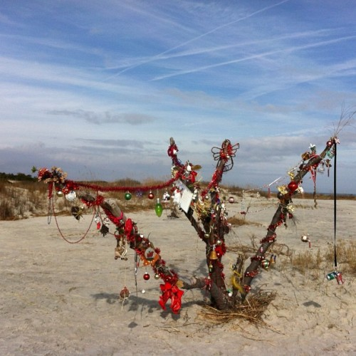 Our island's Christmas tree (at East Beach, St. Simons Island)