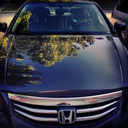 #fresh #new #honda #accord
