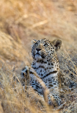 nature-madness:  Curiosity | Marc Mol