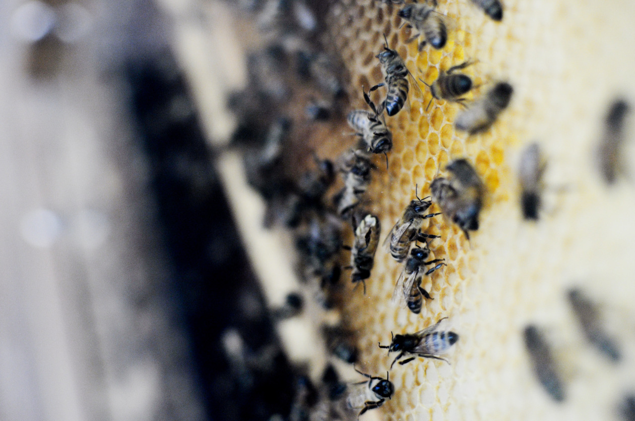 once moved to sardinia, i want to start a hive. i've been reading about the bee world for some time now. it's time to make it real. readers and friends, i welcome any tips, resources or contacts. i'm researching stages and volunteer ops.  / pic via environmentalattaction