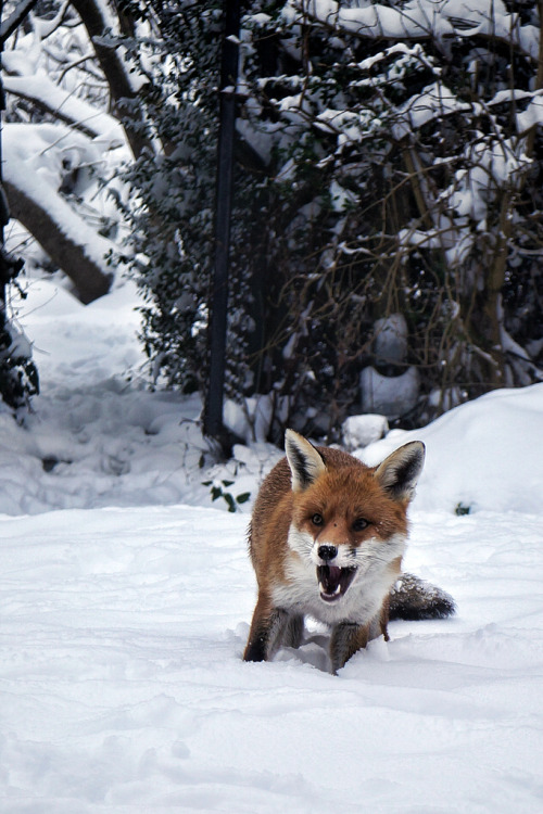 brutalgeneration:  Jan 22nd. Where's the Food (by crewlie)