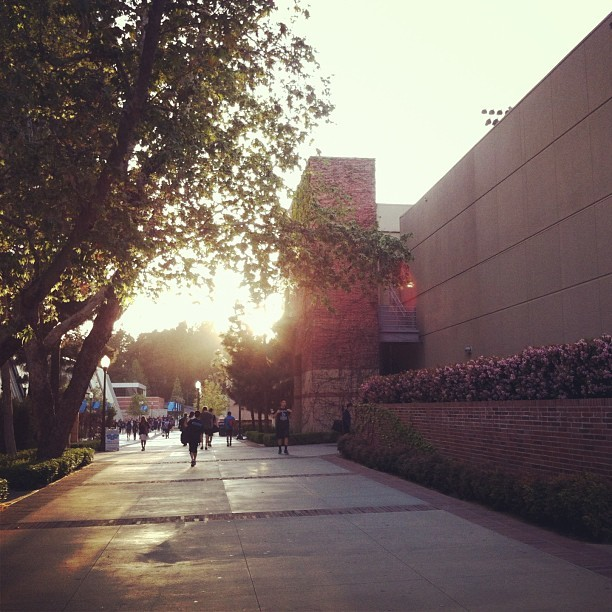 Now that was a beautiful afternoon down #BruinWalk. #ucla