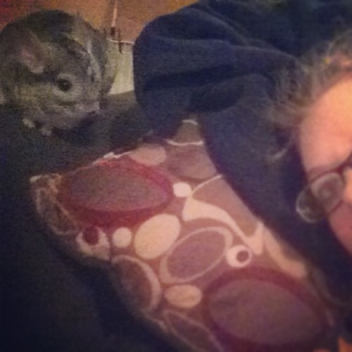 #chobi my #chinchilla pretending to be afraid of me ;) #cutie #instapet #pet