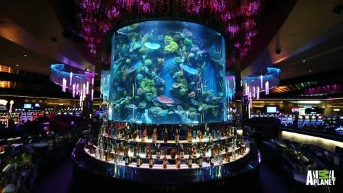 Las vegas aquariums tumblr for Tropical fish las vegas
