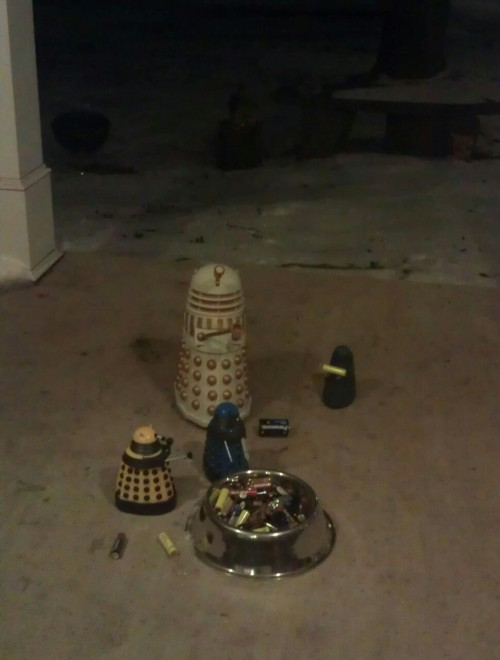 There's a pack of stray daleks outside, so I've been feeding them. Poor darlings.