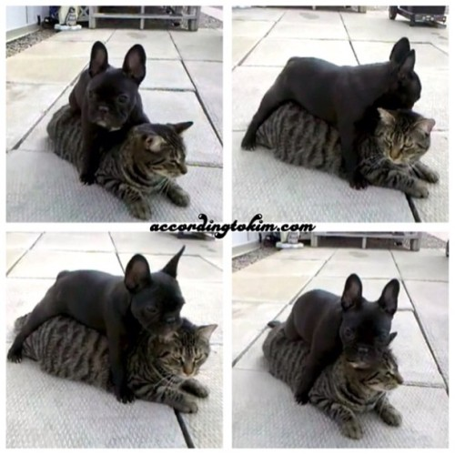 Who said that cats and dogs are enemies? I saw these guys on YouTube and thought they were the cutest!