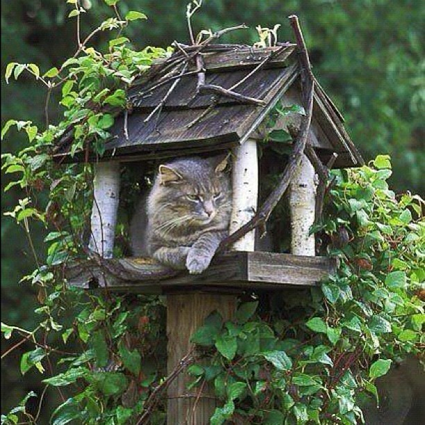 Gd night all 🏡🐱 #sweetdream #cat #cute #tree #thailand #thaistagram #instamood #instagood #landscape_lover #lovernotafighter #instafamous #igth #implus #ispygram #all_shots #fresh #happy_hour #green #gang_family #group_couleur #photooftheday #bangkok #beautiful #bestoftheday