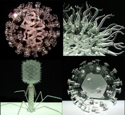 a-bit-of-science:  Artist Luke Jerram makes exact glass replicas of harmful viruses, prions and bacteria. Each replica is about 1,000,000 times the size of the actual pathogenFrom top to bottom, left to right: Swine Flu, E. Coli, T4 Bacteriophage and a Human Papilloma (HPV).Take a look at the rest of the gallery for Malaria, Smallpox, SARS and HIV. http://bit.ly/Wf00IG