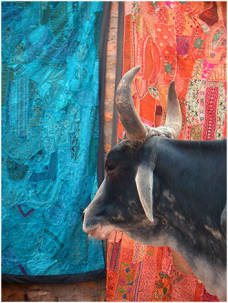 omnomnom74:  holy cow & embroidered textiles, jaisalmer by nevil zaveri on Flickr.