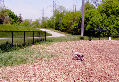 My girl, runnin'! Still getting settled in Burlington, Ontario! Soon I'll have my studio up and running… But for now I'm having fun in the sun with my sweet girl!