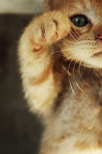 janetmillslove:  Moment Adorable kitty Love