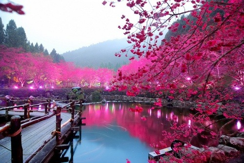 cherry-blossoms-of-dreams:  Cherry Blossom Lake, Sakura, Japan  OMG id be in heaven