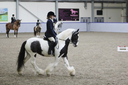 jacobthefell:  In one of his ridden classes yesterday. Ditched the tweed for the evening performance. This pony has come so far.