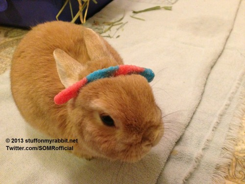 stuffonmyrabbit:  Gummy worm
