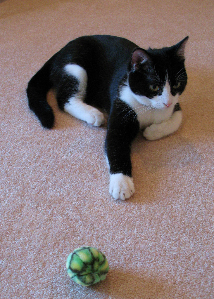 """I can't reach my toy again, mom. Help."" Photo by ©Knit and Run"