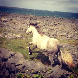 loveyourchaos:  Inishmore, The Aran Islands.