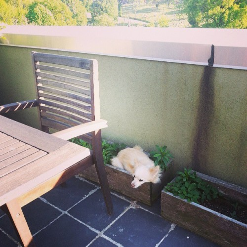 Clems found a new place to nap. / on Instagram http://bit.ly/17HvWPd