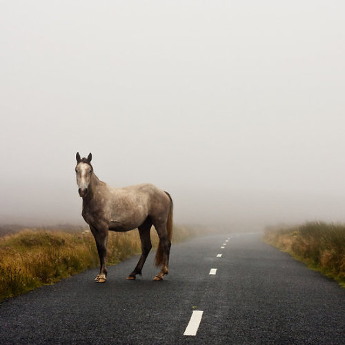 randomitus:  valscrapbook:  stayrustic: Sallygap horse  Sallygap…about 20 mins from where I grew up in Ireland