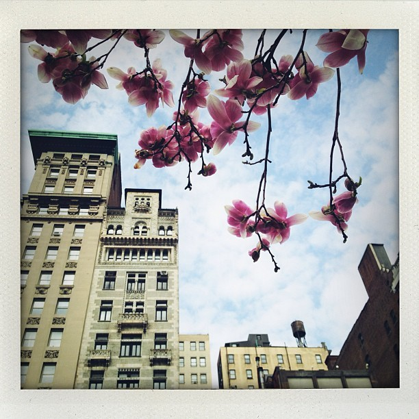 nevver:  Blossoms in New York