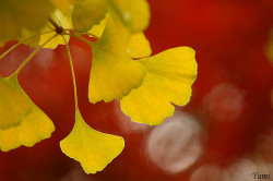 hallucinatin9:  yellow and red by * Yumi * on Flickr.