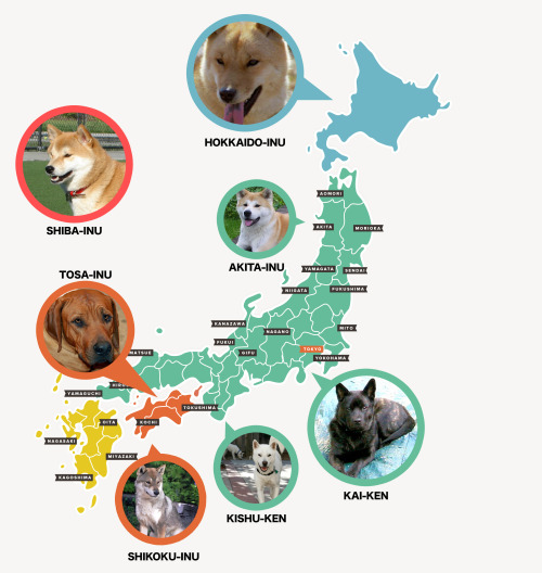 otsune:   Japanese Dog Breeds And How To Get Them