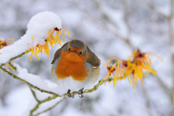 European Robin by Jacky Parker Floral Art on Flickr.