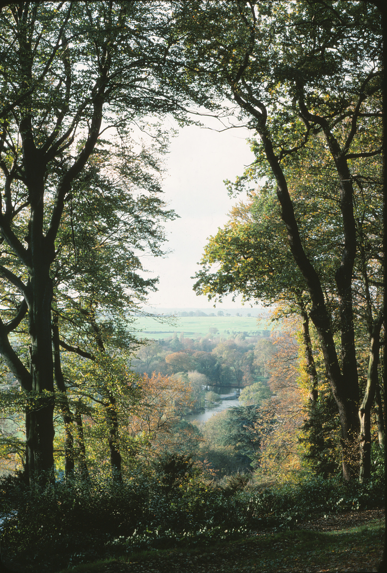 naturalphotos:  Thames Valley, England © 1976 (For more like this visit naturalphotos.tumblr.com)