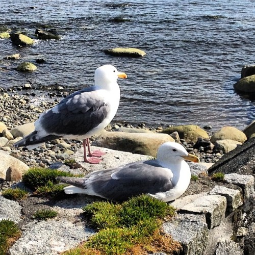 These pretty birdies are taking zen break and enjoying the Vancouver view.