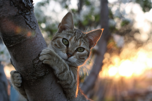photogenicfelines:  (Maria Emma.)