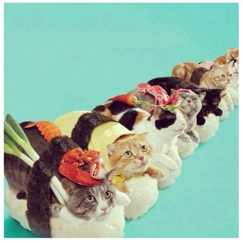 Sashimi! The things you stumble across… #sushi #cats #catlady #kittens #lmao #lol #cute