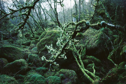 nostalgic-dreaming:  Old Forrest by xTorfinnx on Flickr.
