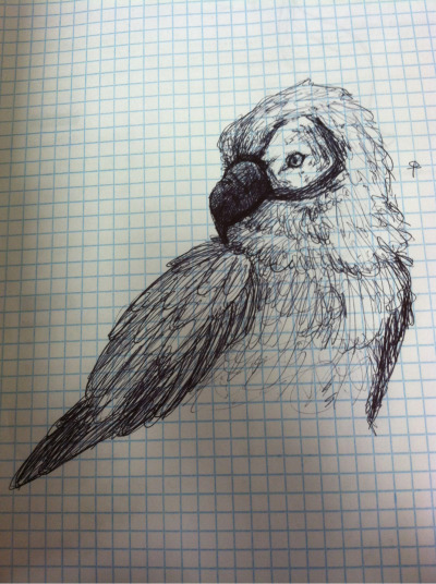 i drew a macaw instead of doing my algebra homework