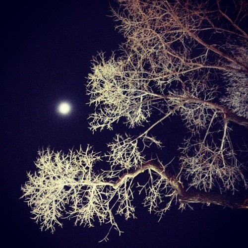 #fmsphotoaday December, Day 21: Tree #tree #moon #nature #winter #sky #night #lookingup