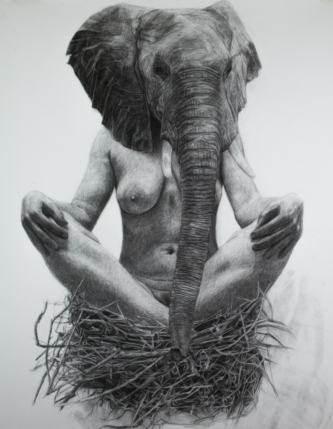 "just-art:  Elephant Nest by Kelly Blevins 52"" x 70"", Charcoal on paper, 2013"