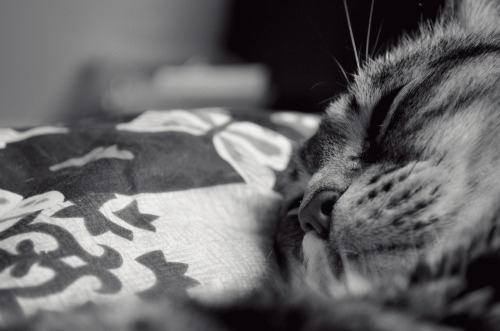 Kitty dreams…