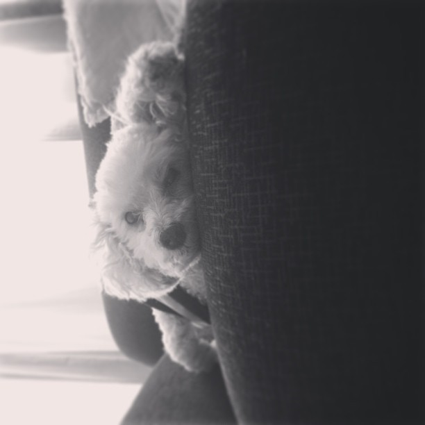 preguicinha #dog #cute #sleep