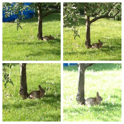 Poneyoti was under the Apple Tree Today to visit Me <3 :)