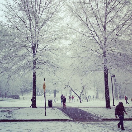 The Winter Wonderland that is the University of Alabama's quad! #snow #Alabama #Quad #UA