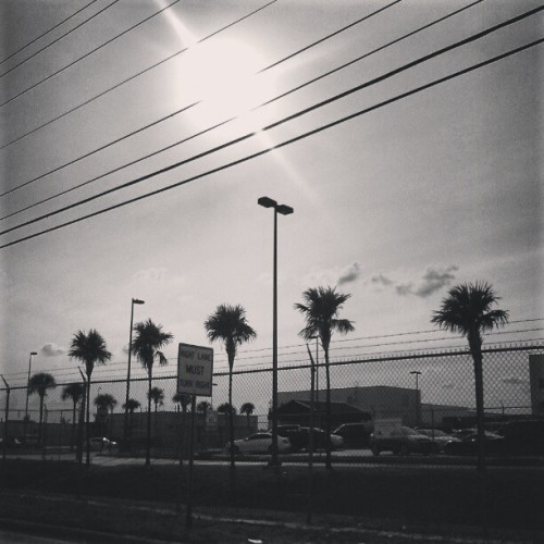 Miami and it's famous palm trees #takenwithmobile #mobile #photography #photoshoot #photographer #photooftheday #outdoors #nature #clouds #sky #fotografia #fashion #clothing #model #modeling #miami #canon #nikon #pentax #quackstudios #mua #music #dj #cloudporn #art #trees #love #passion #instagood