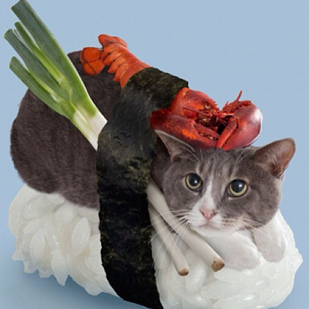 #catsushi is the latest #viral craze… 😧 What does this say about out #culture?…