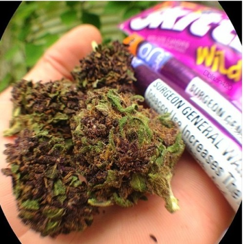 dutchiemag:  From:@marijuanapictures Brought to you by The Dutchie