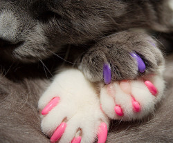 catp0rn:  Paw Pillow on Flickr
