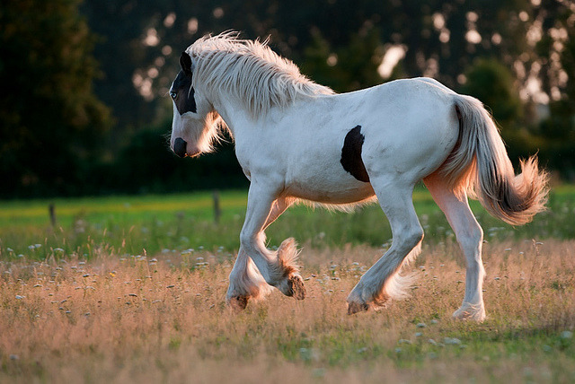 Running horse by Van Gelder Patrick on Flickr.