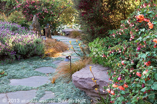 Garden path photographed by Saxon Holt. Check out his facebook page for the original article from the blog Gardening Gone Wild:  https://www.facebook.com/saxon.holt.wall?fref=ts. Thanks to Mr. Holt for use of the photo.