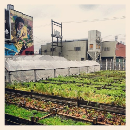 The SoleFood Urban Farm on East Hastings Street is sprouting to life once again. C'mon spring! You can find more of my pics on Instagram at @itcaughtmyeye