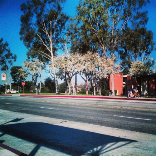 What a gorgeous but chilly morning(: Goodmorning !! #CSULB #monday #school #busstop