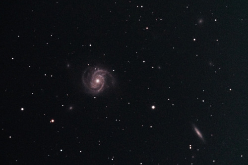 uraniaproject:  Galaxy M100 in Coma Berenices by crowlem on Flickr.