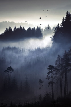 cre8ti0n:  Above The Pines By wonderlustphotography